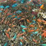 Coral-Reef-Research-and-Capacity-Building-UNU-INWEH