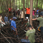 International-Mangroves-Course-UNU-INWEH