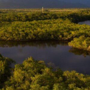 amazon river aerial